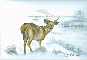 watercolour deer 2 lighter2